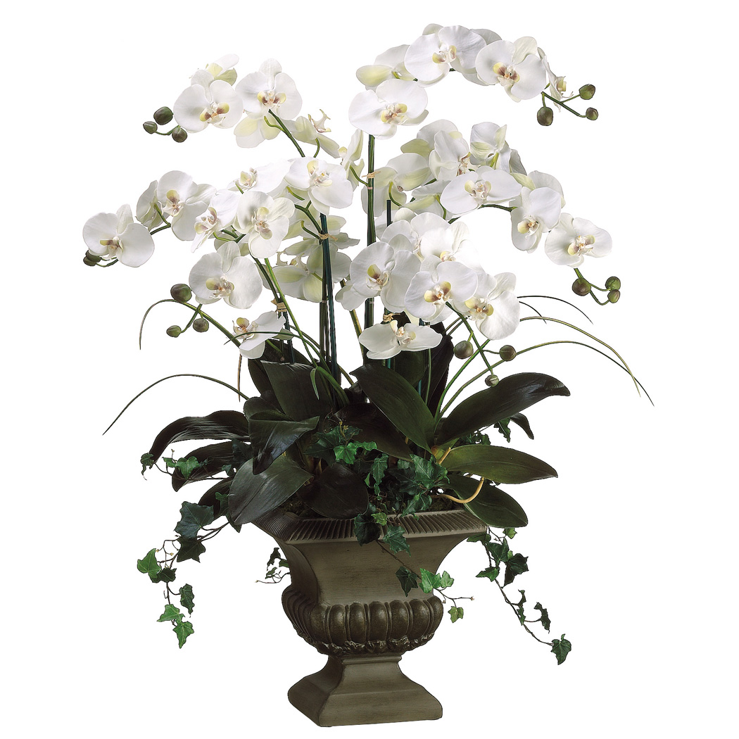 Symbolic meaning of traditional funeral flowers lifestory occasions when giving an orchid plant as a gesture of sympathy it is important to give consideration to color pink and white are traditional izmirmasajfo