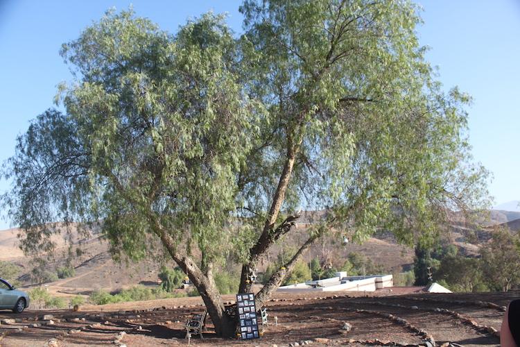celebration-of-life-tree-planting-ceremony