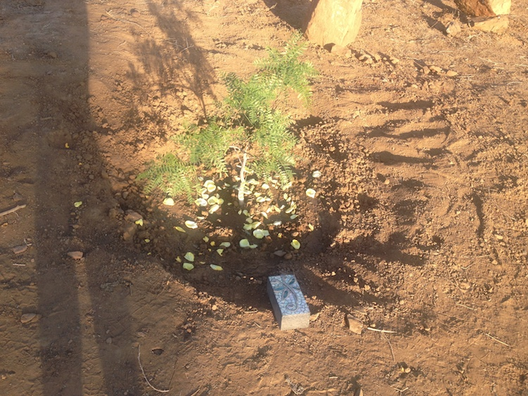 celebration-of-life-tree-planting-ceremony15